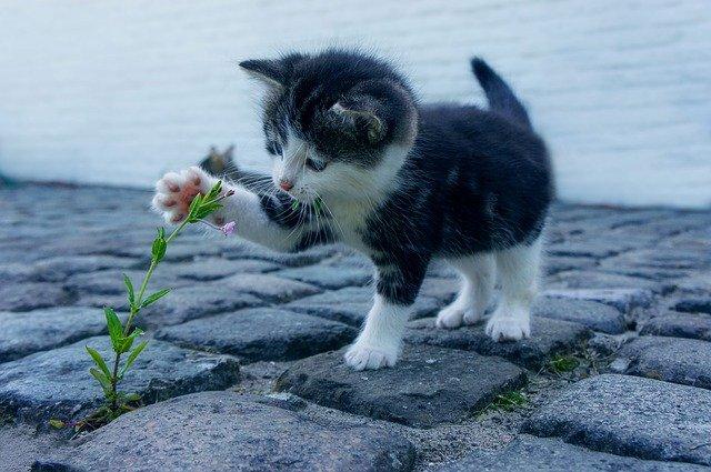 Huisdieren hebben een positief effect op je gezondheid